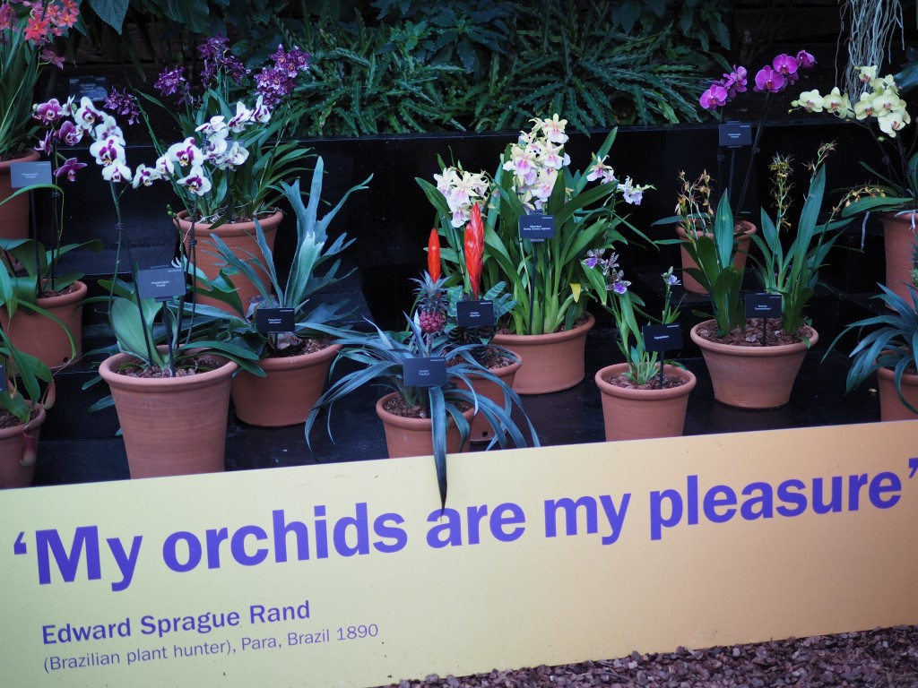 Orchids at Kew